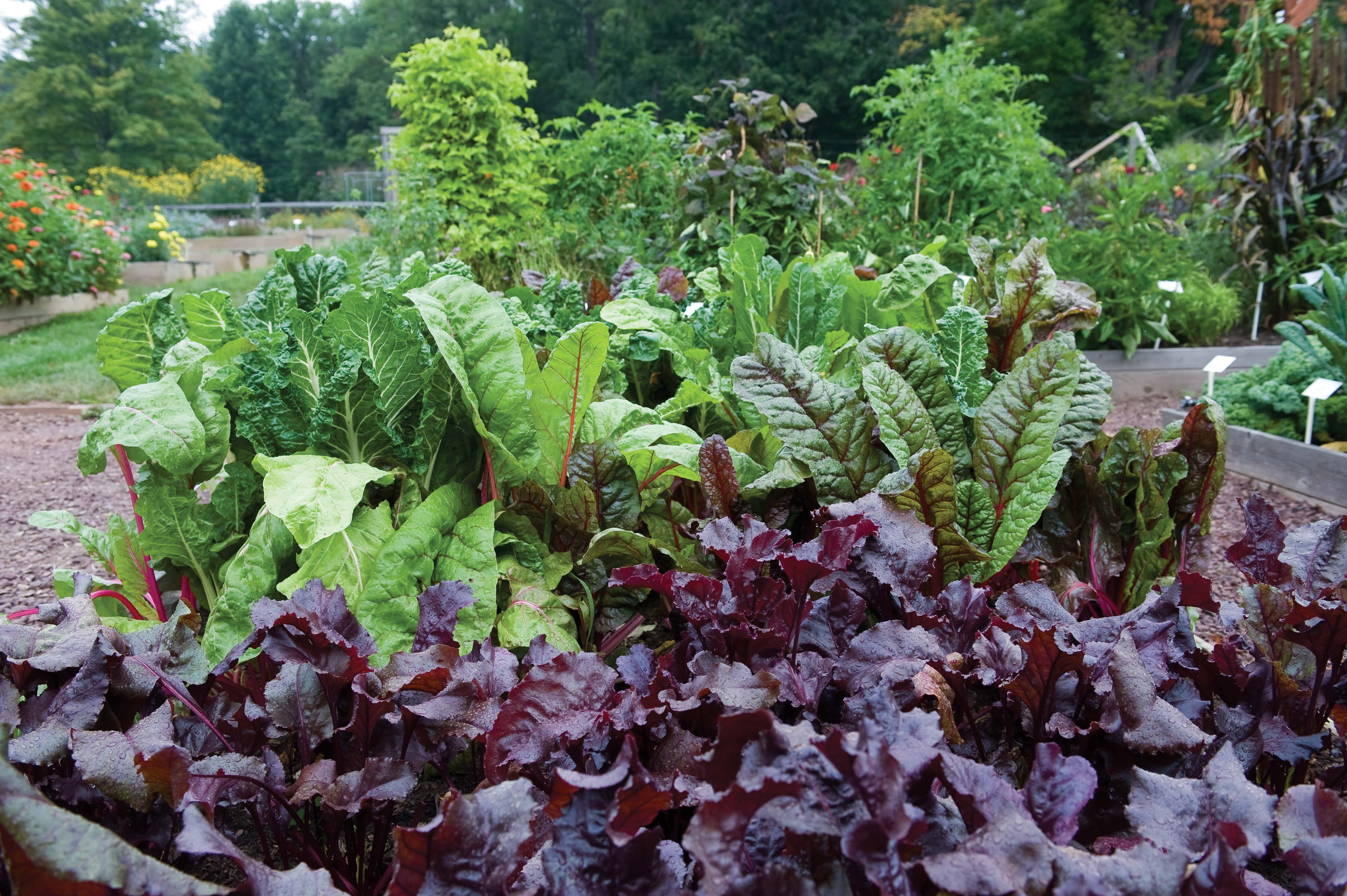 Our Kitchen Garden We The Vegetables Commentary On Our Vegetative State David