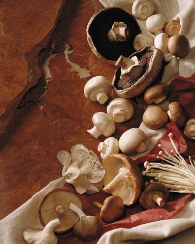 Mixed-Mushrooms_on_Slate-Perfect_Partner-sized